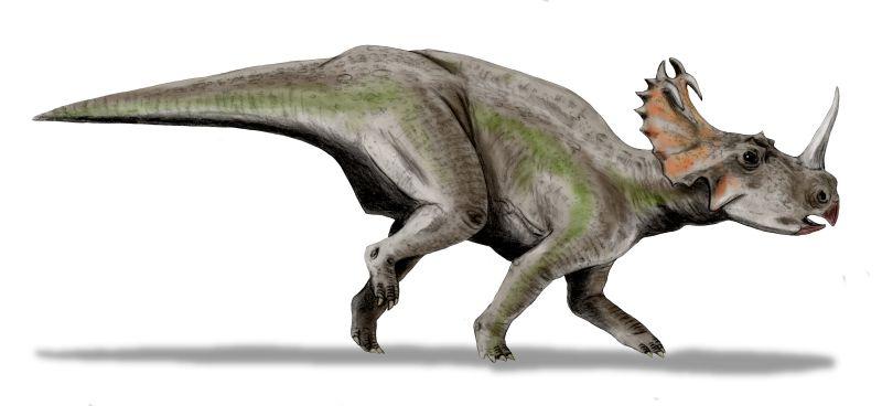 centrosaurus_bw