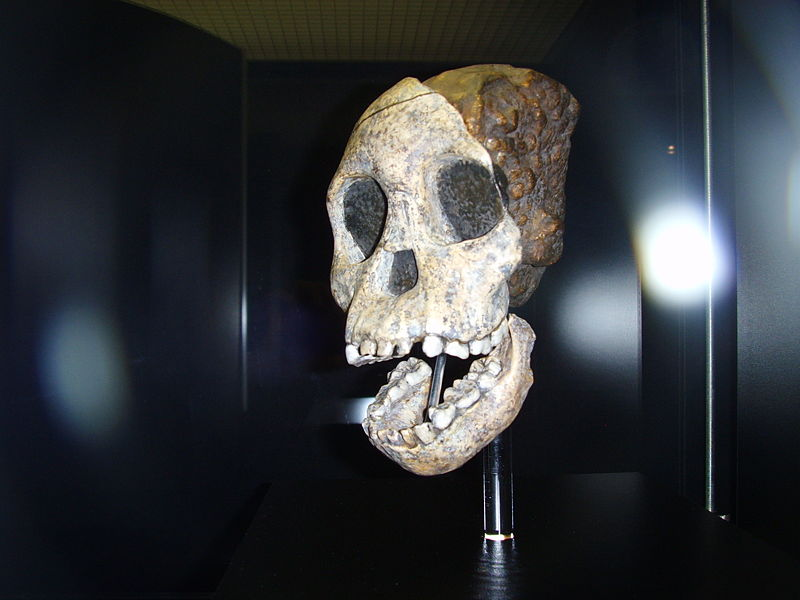 taung_child_frankfurt_am_main_1