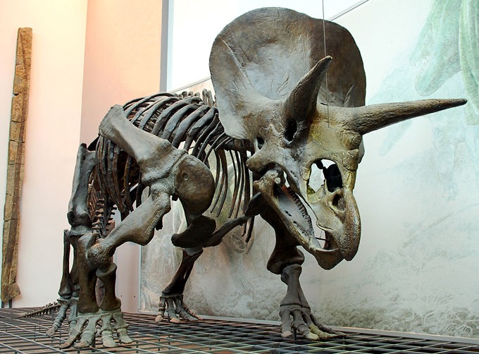 triceratops_skeleton_senckenberg